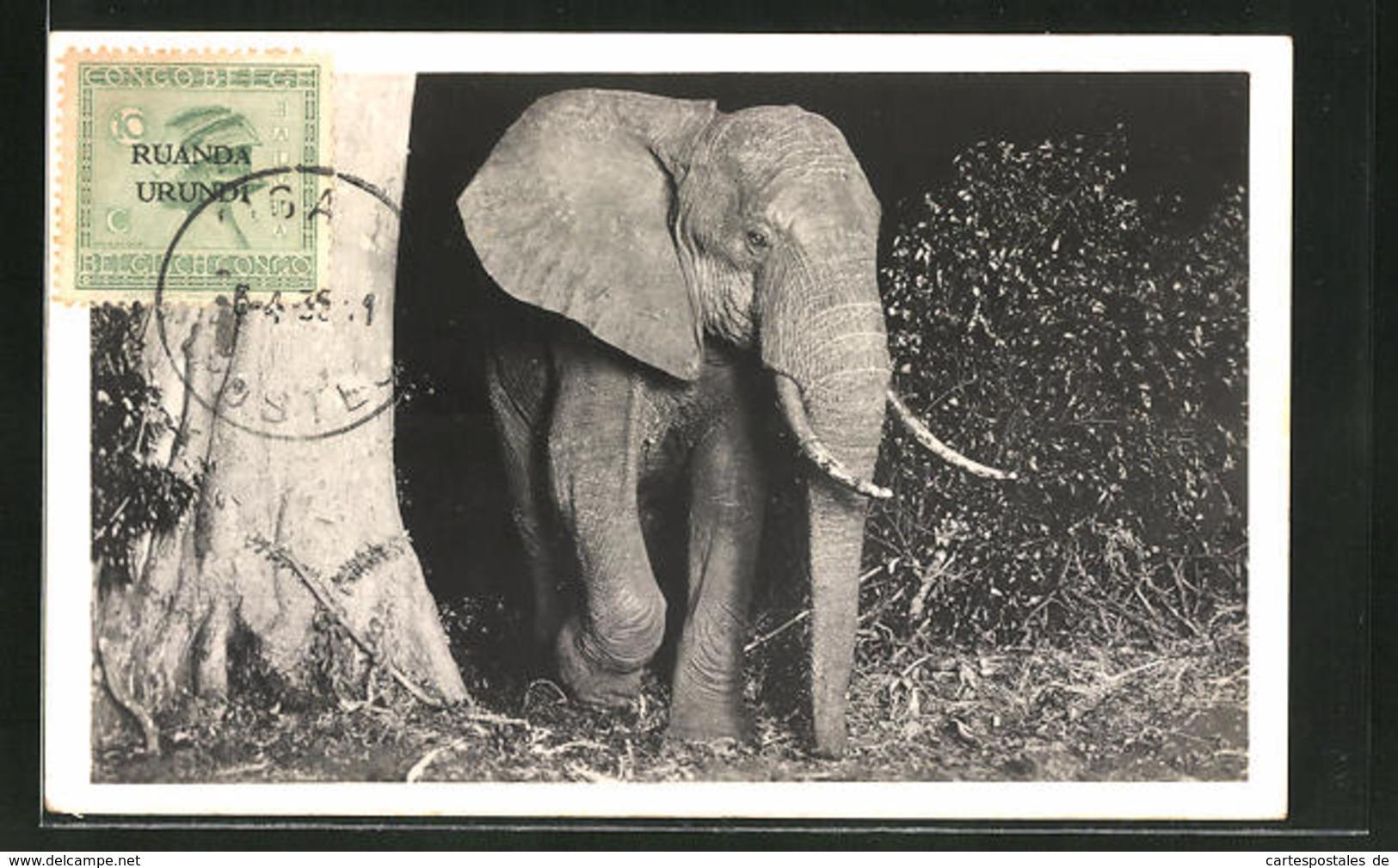 AK Afrikanischer Elefantenbulle - Elephants