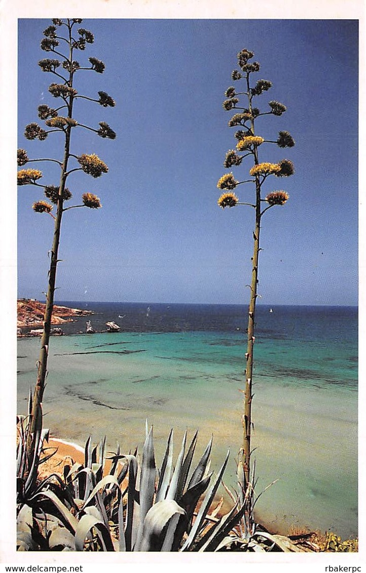 Stamped Post Card With Beach Scene From Sicilia - Italy