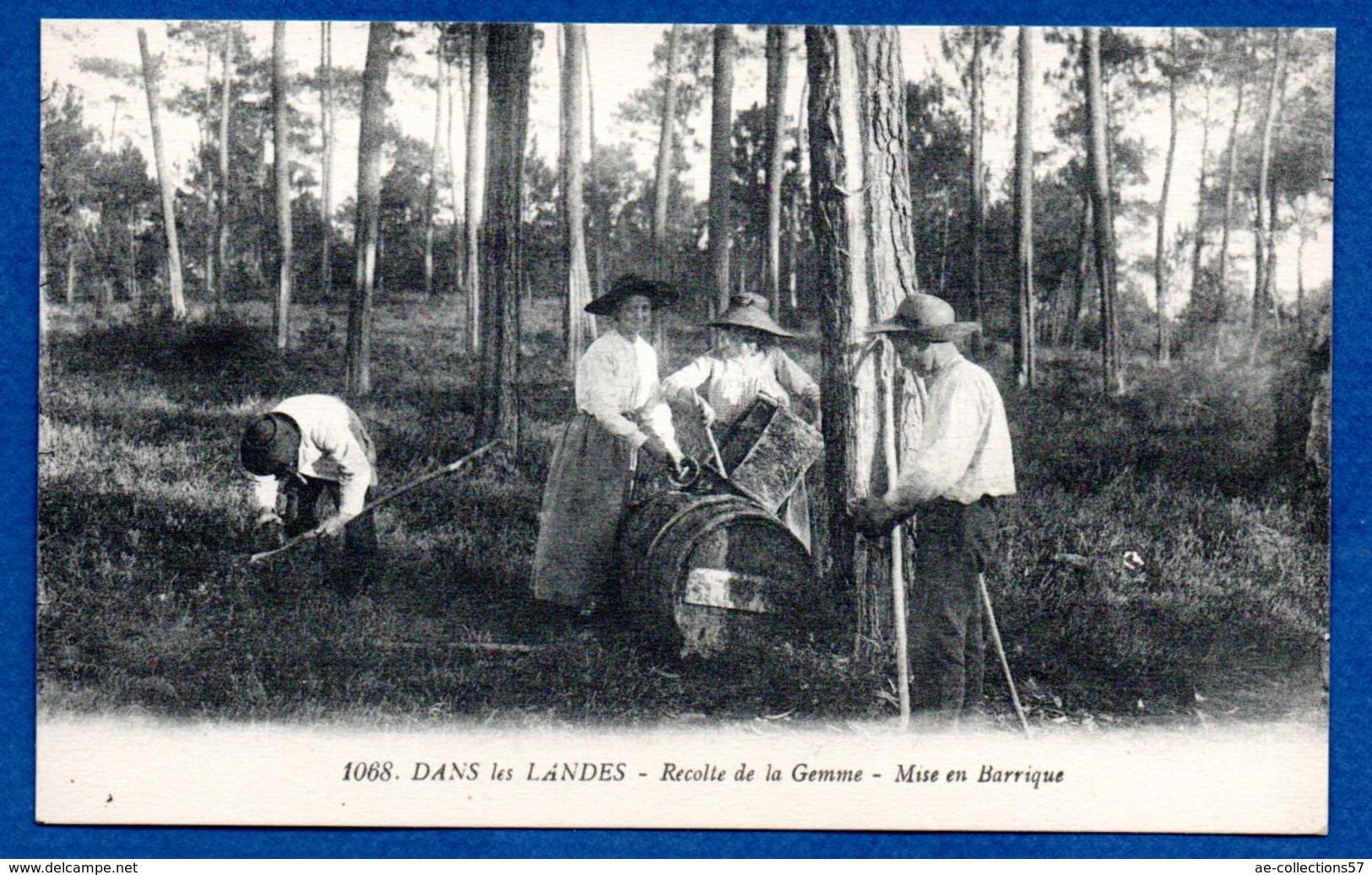 Landes -  Récolte De La Gemme - Unclassified