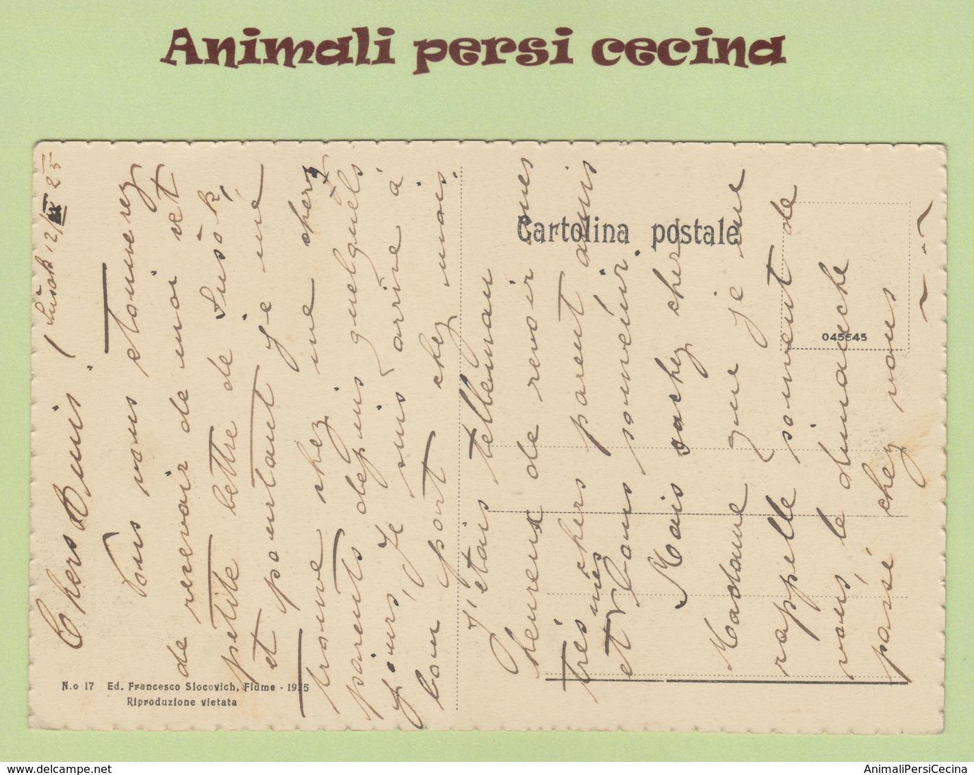 FIUME RIJEKA - PIAZZA GIUSEPPE VERDI - CARTOLINA - LT60-019 - Croazia
