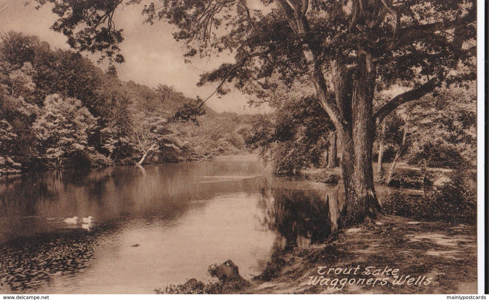 AQ95 Trout Lake, Waggoners Wells - Local Publisher - Surrey