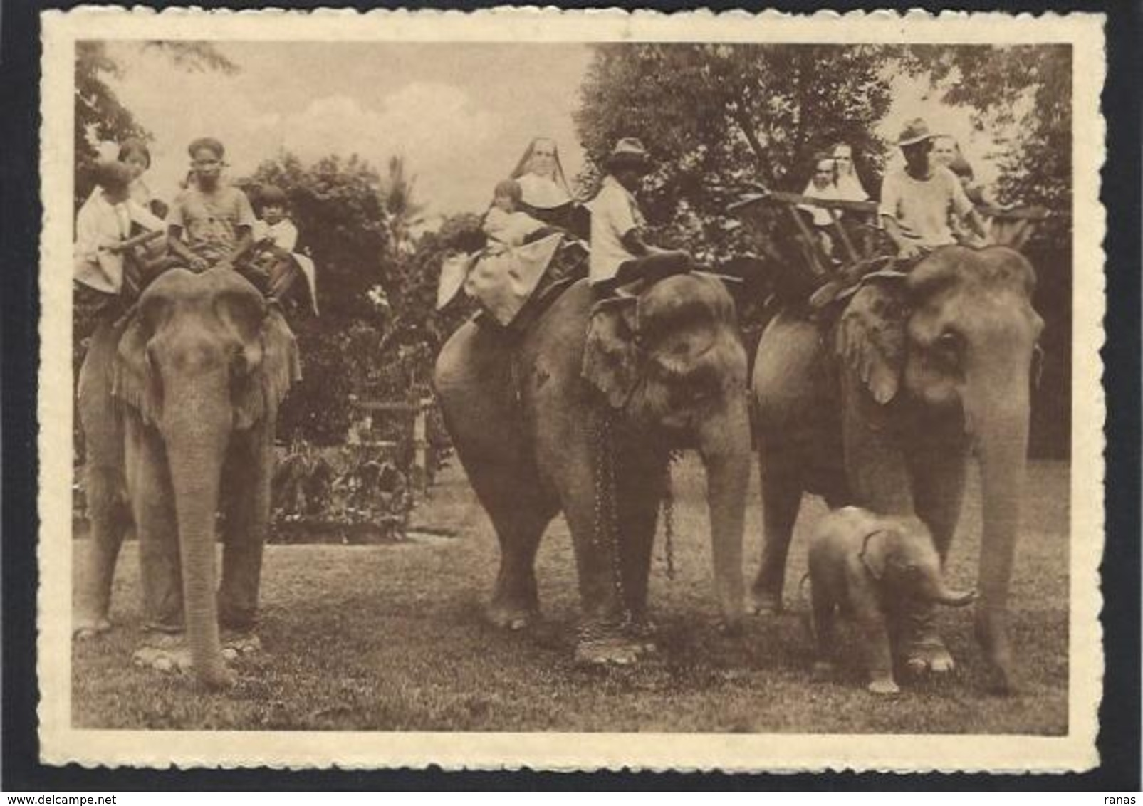 CPSM SIAM Thaïlande Asie Non Circulé éléphant - Thailand