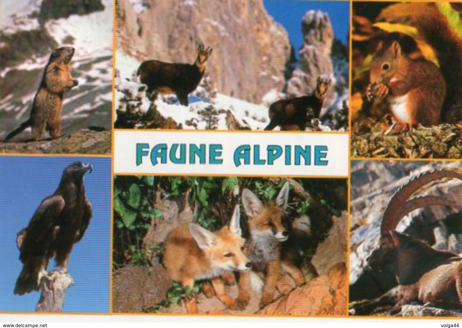 CP Animaux Des Alpes - Renard Marmotte  Bouquetin Ecureuil - Autres