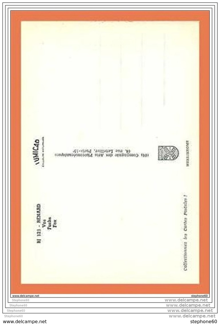 A227/271 Renard - Animaux & Faune