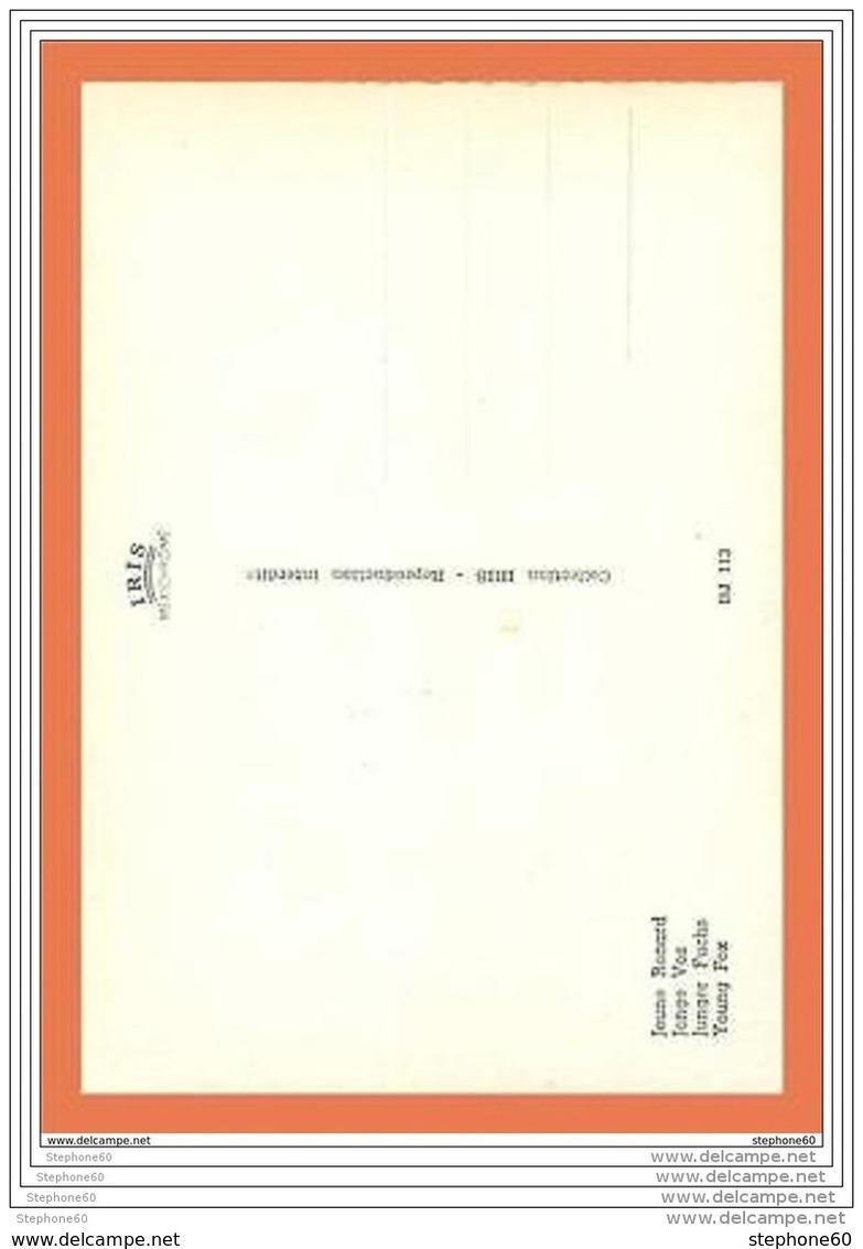 A226/581 Jeune Renard - Non Classés