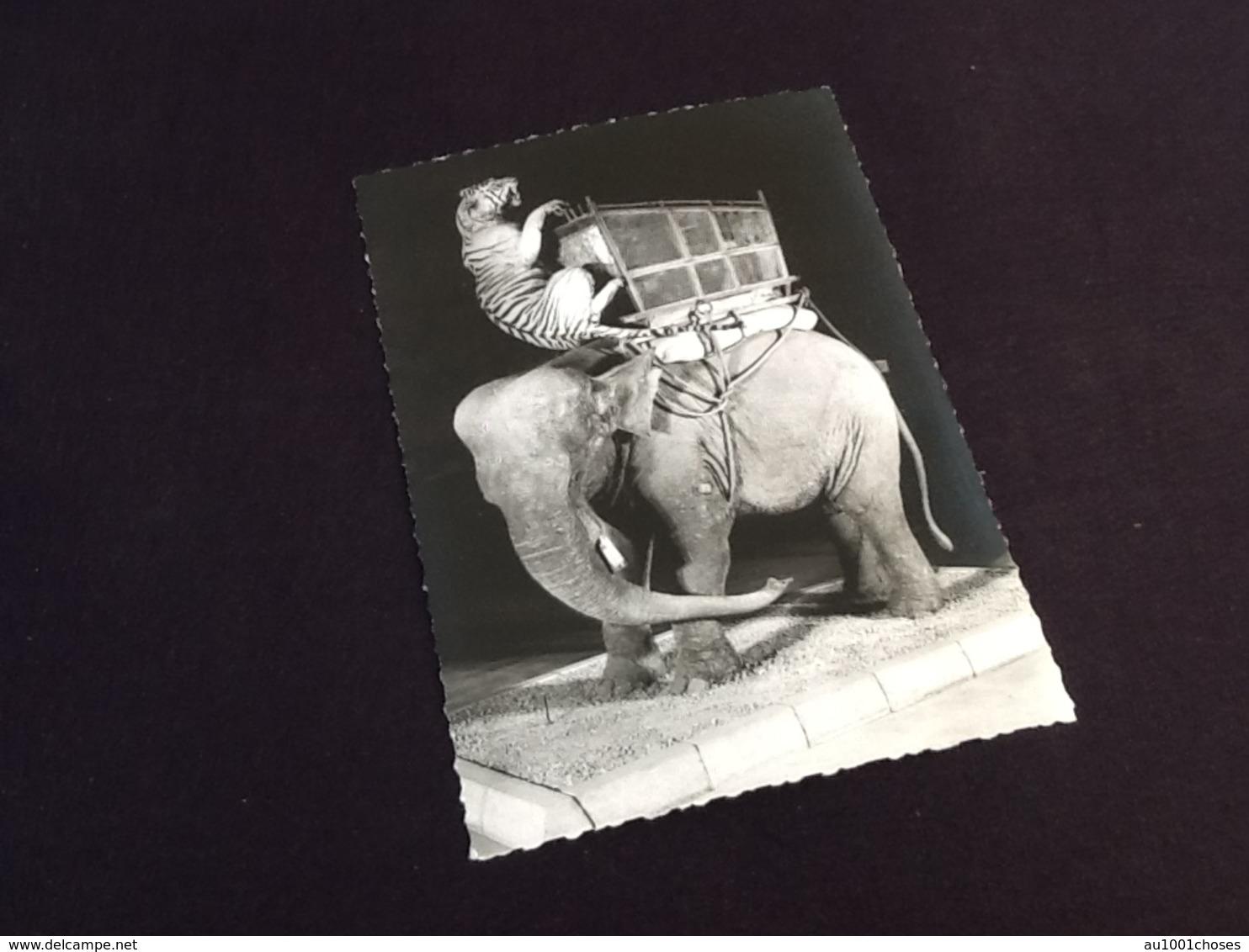 75   Muséum Histoire Naturelle Paris Musée Du Duc D' Orléans Episode De Chasse Au Tigre Dans L' Inde - Musea