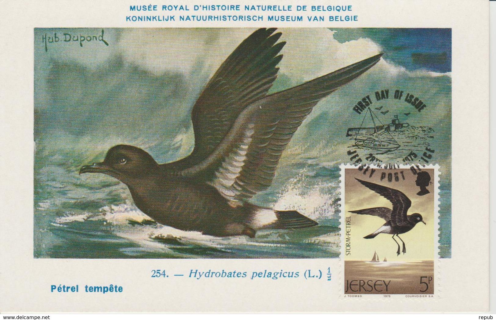 Jersey Carte Maximum Oiseaux 1975 Pétrel 118 - Jersey