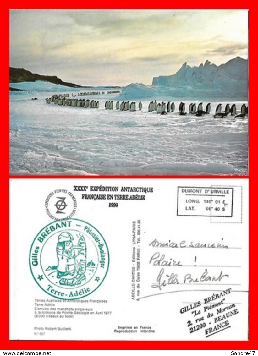 CPSM/gf TERRE-ADELIE (Taaf)  L'arrivée Des Manchots Empereurs à La Rookerie. Pub G.Brébant Pâtissier-boulanger...I0307 - TAAF : Terres Australes Antarctiques Françaises