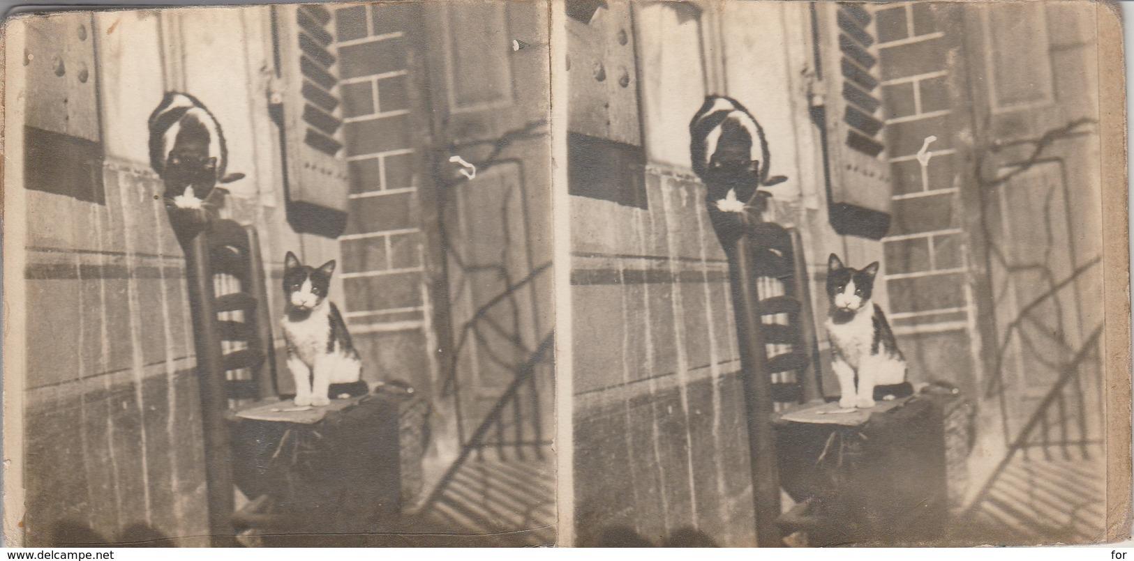 Photos-stéréo. : Scéne De Vie -- Les Chats ( Aucun Frais ) - Stereoscopic