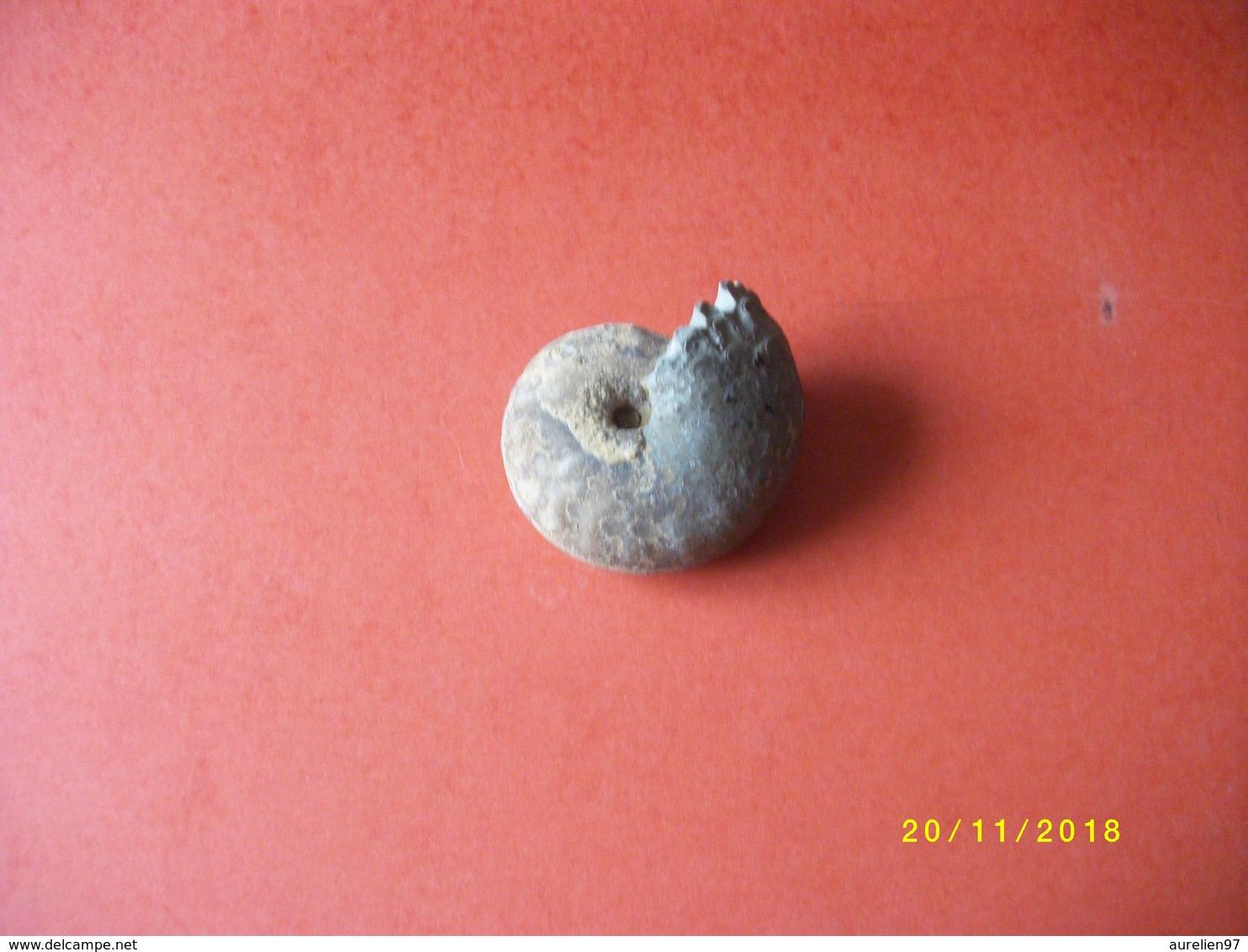 Ammonite 160 Grs 7x6cms - Fossiles