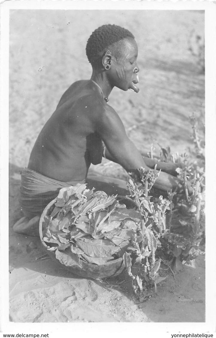 Oubangui Chari - Scenes Et Types V / 06 - Cueillette Du Tabac - Centraal-Afrikaanse Republiek