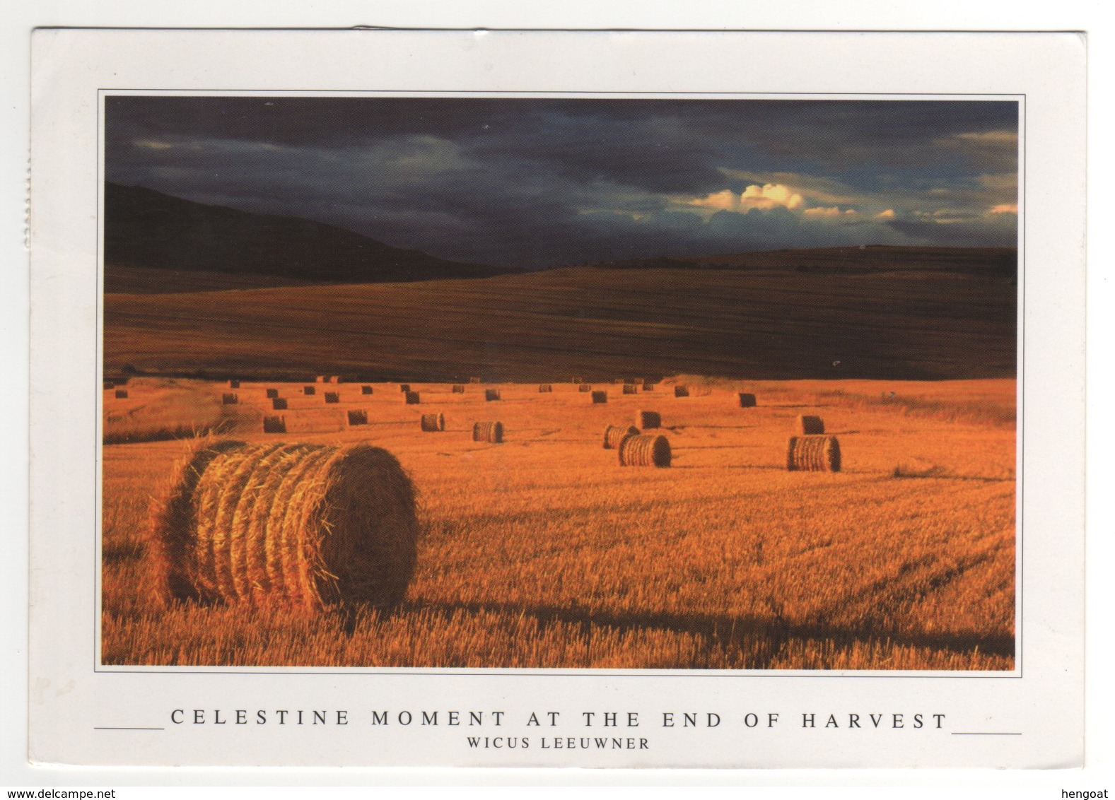 """Beau Timbre , Stamp  """" Insecte """" Sur Cp , Carte , Postcard Du 11/11/2011 - Afrique Du Sud (1961-...)"""