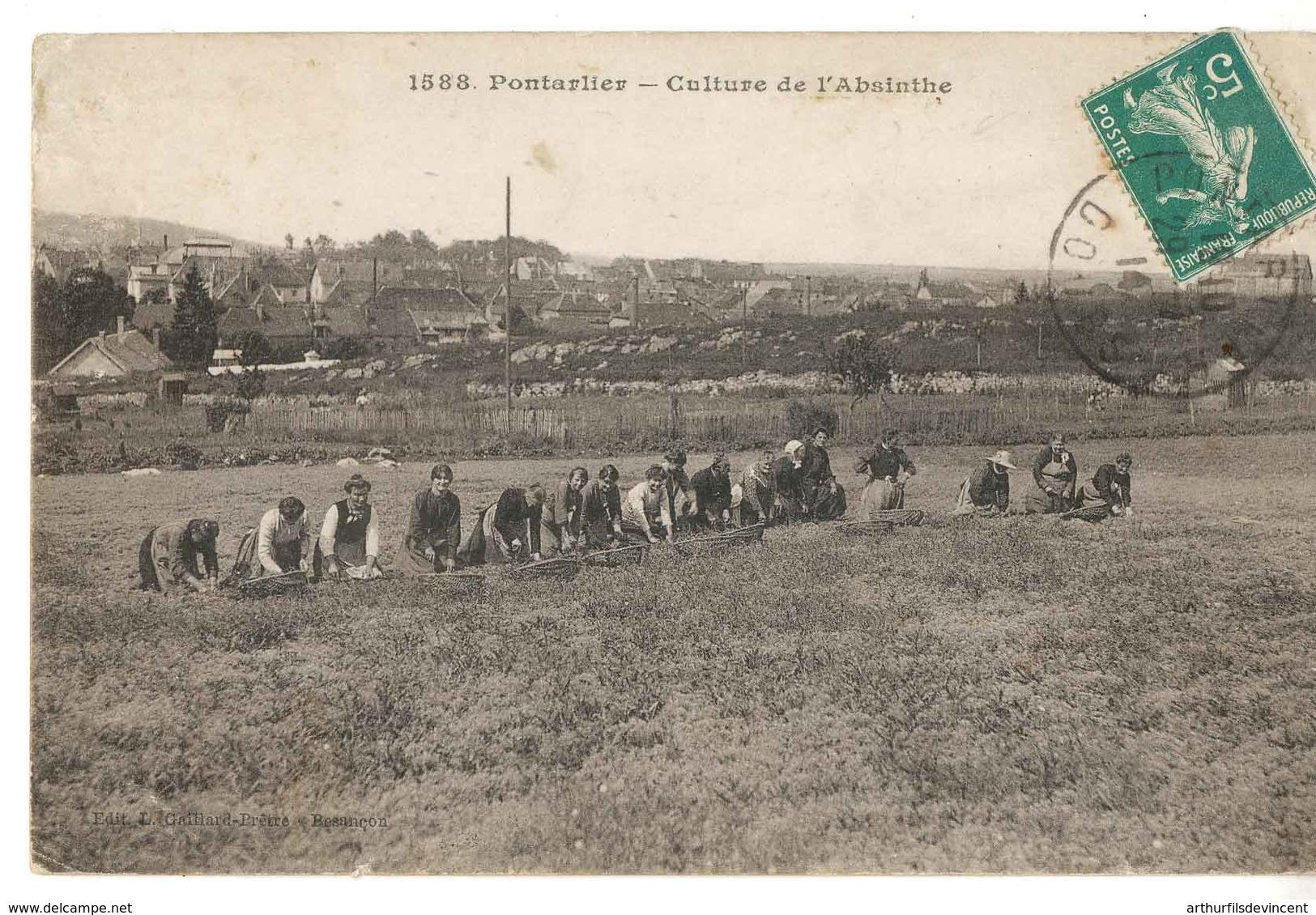 PONTARLIER  CULTURE DE L'ABSINTHE - Pontarlier