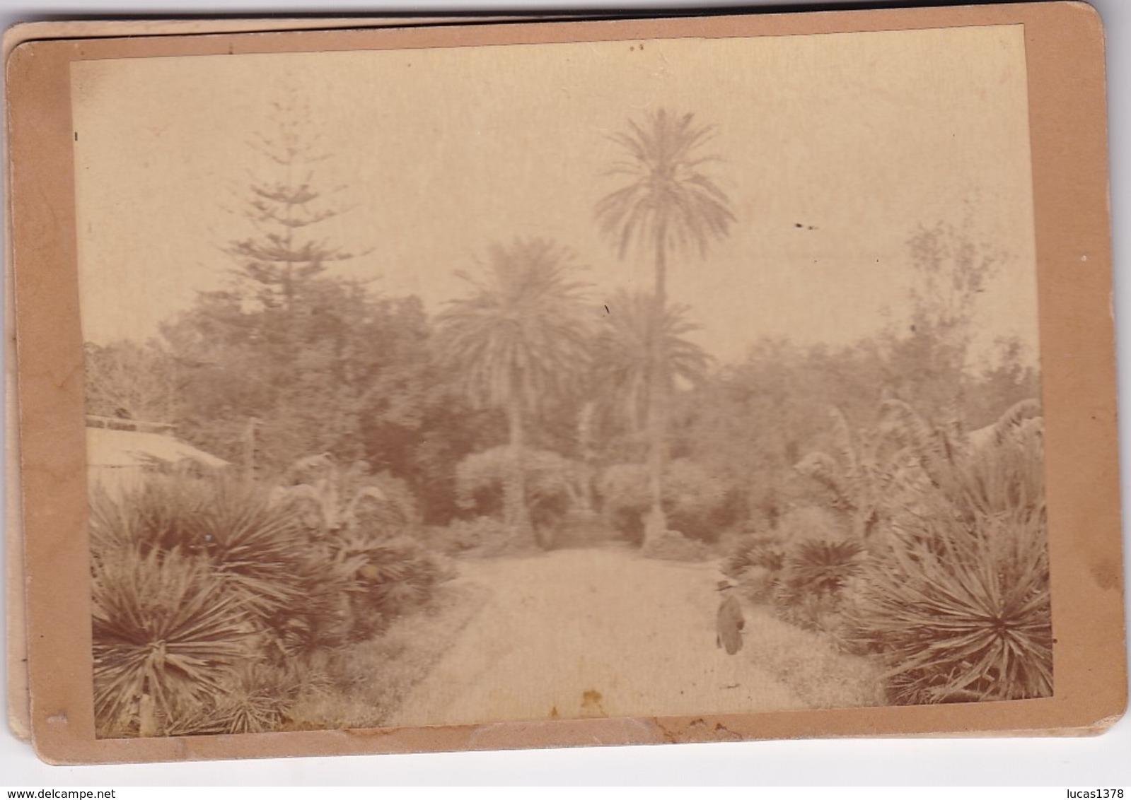 ALGERIE / ALGER / JARDIN D ESSAI / /   PHOTO COLLEE SUR CARTON - FIN XIXe DEBUT XXe Siècle / 16 X 10 CM - Anciennes (Av. 1900)