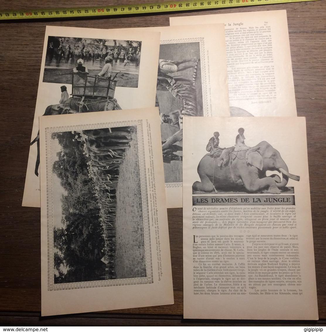 1909 DOCUMENT DRAMES DE LA JUNGLE RHINOCEROS TIGRE PANTHERE ELEPHANTS - Vieux Papiers