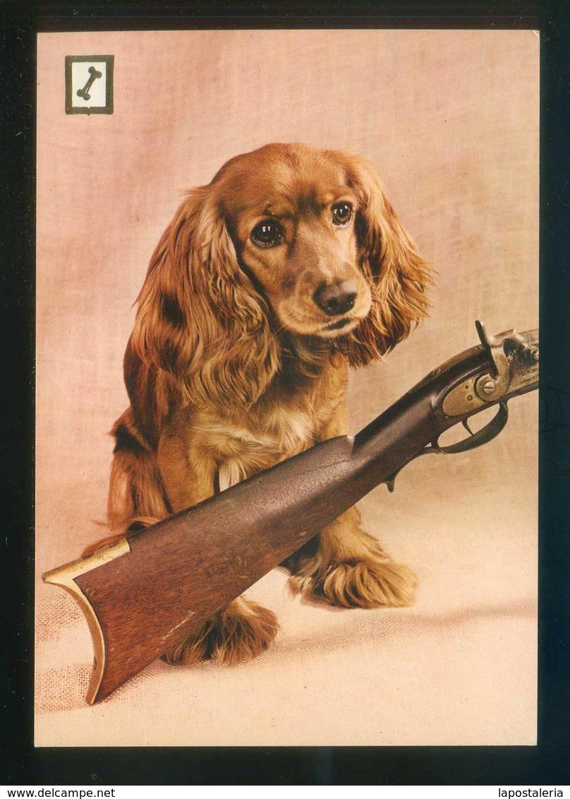 Perro. Ed. FISA, 1ª Serie Animales Domésticos Nº 1. Dep. Legal B. 3478-X. Nueva. - Perros