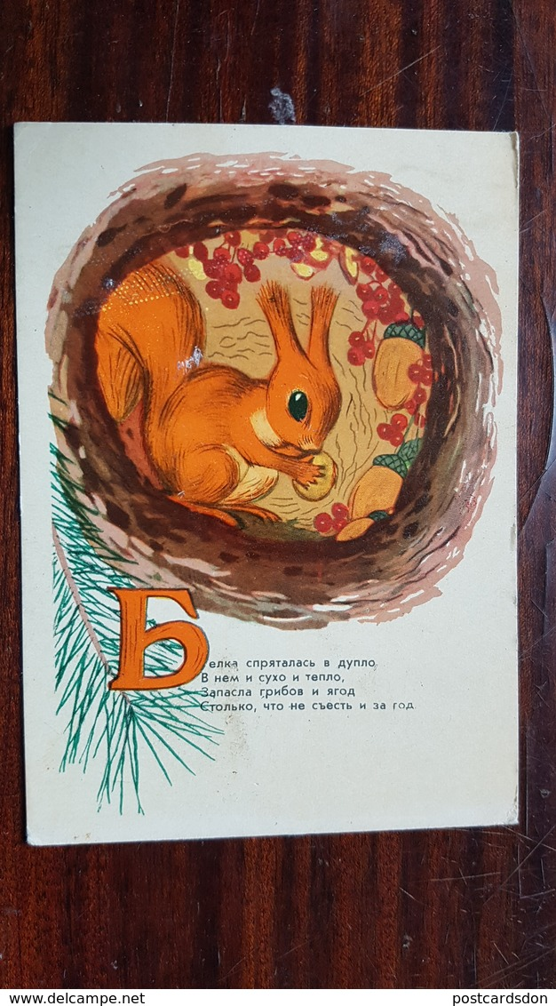 Dudnikov-  Champignon - OLD Postcard - MUSHROOM 1958 - Champignons