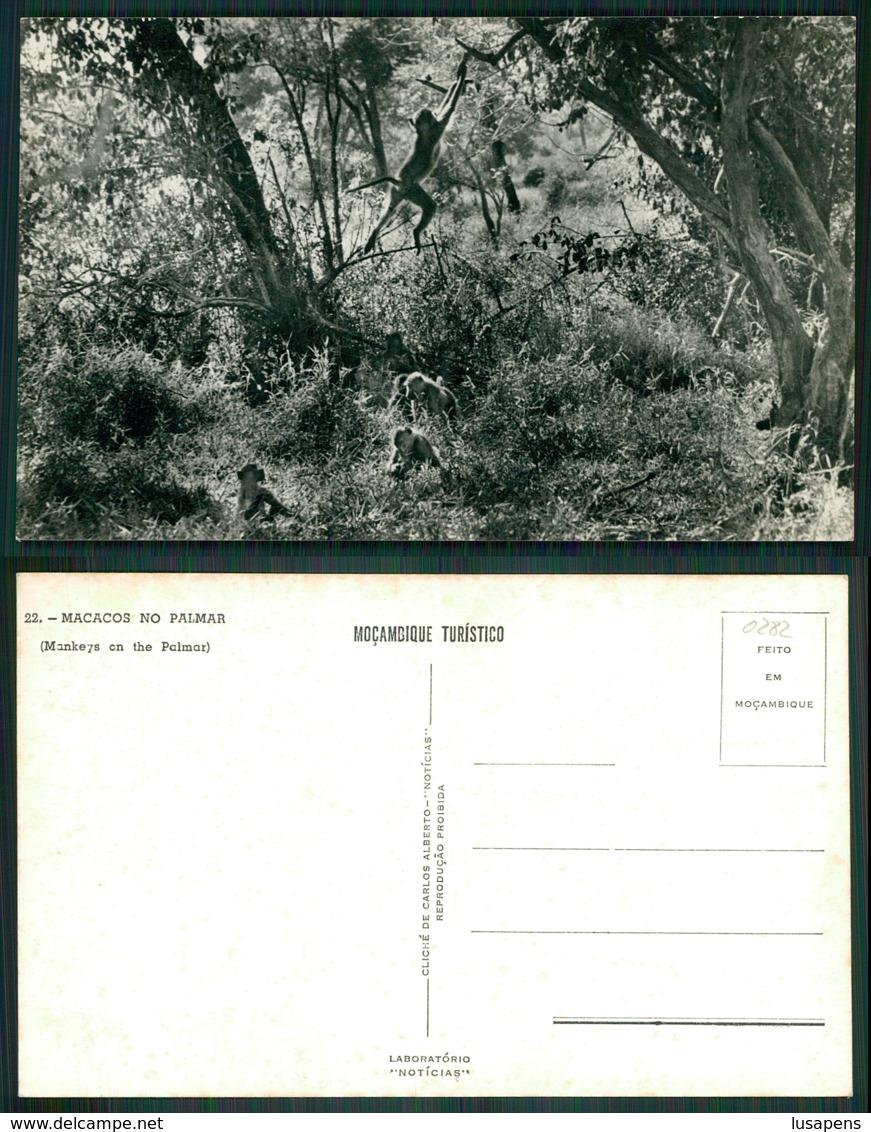 MOÇAMBIQUE [ 0282 ] - GORONGOSA ?? BEIRA - MACACOS NO PALMAR MONKEYS ON THE PALMAR - Mozambique