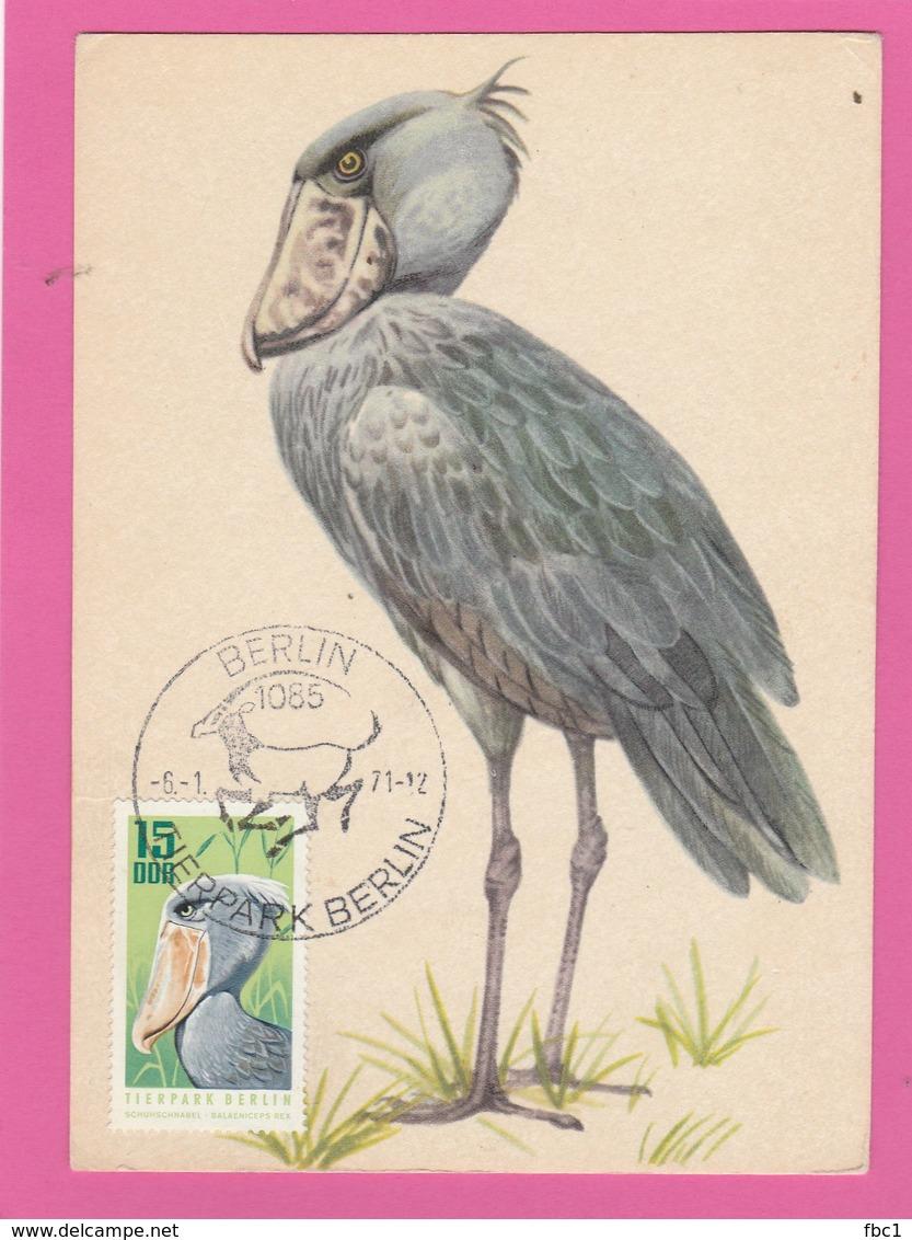 Carte Maximum - Oiseaux - Bec En Sabot Du Nil - Allemagne - DDR - Tierpark - Berlin - Oiseaux