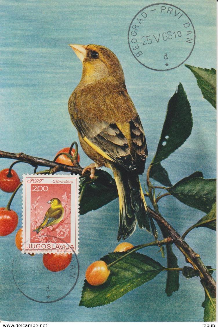Yougoslavie Carte Maximum Oiseaux 1968 Verdier 1180 - Cartes-maximum