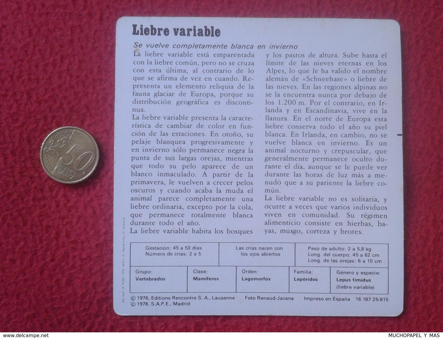 ESPAGNE SPAIN FICHA SHEET FICHE RABBIT LAPIN LIÈVRE HARE CONEJO HASE LIEBRE VARIABLE VER FOTO/S Y DESCRIPCIÓN ECOLOGÍA - Animales
