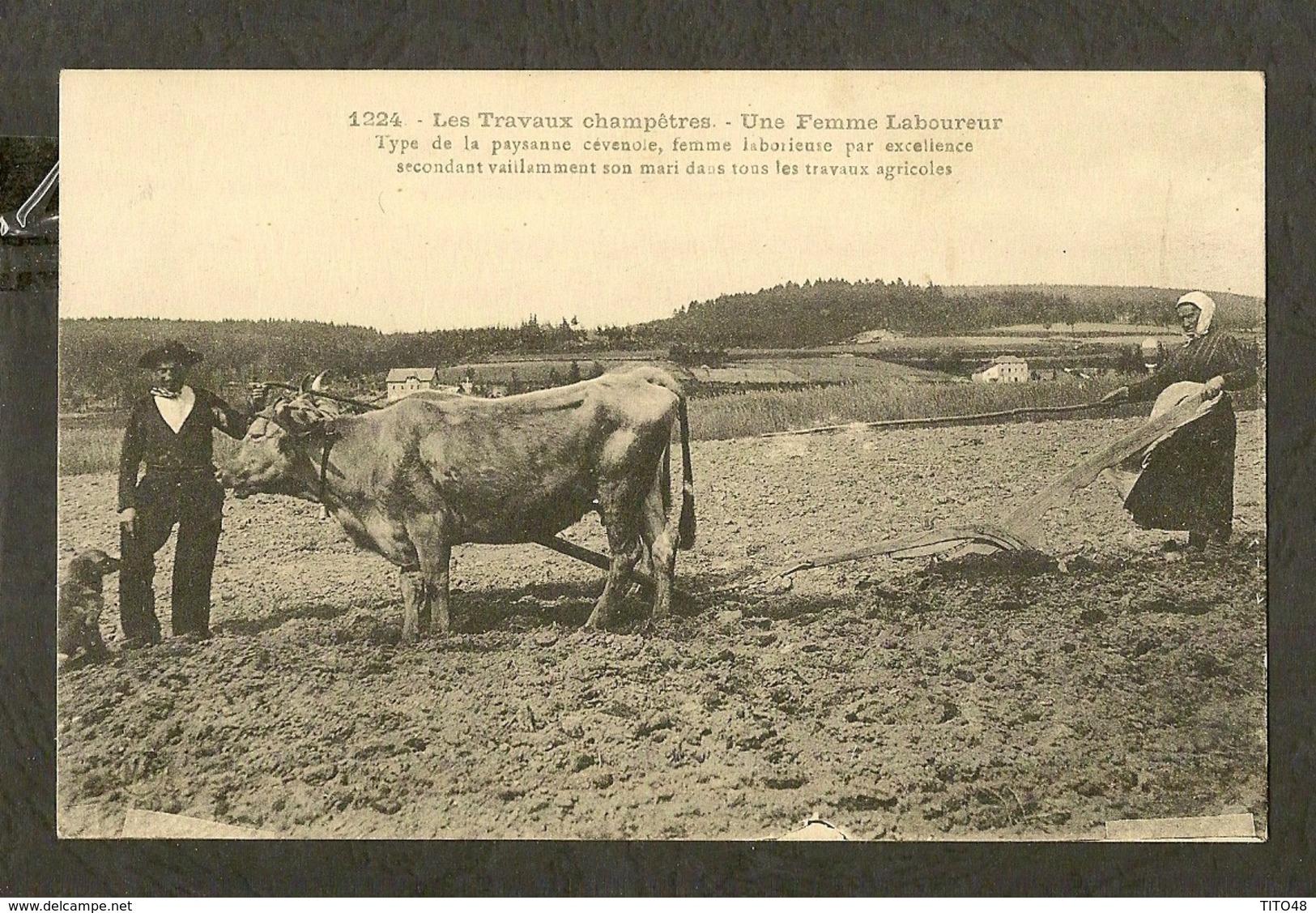 CP-AGRICULTURE - Une Femme Laboureur - Type De La Paysanne Cévenole - Attelages