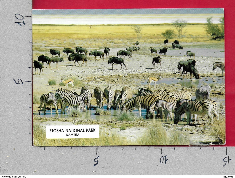 CARTOLINA VG NAMIBIA - ETOSHA National Park - Zebra - 10 X 15 - ANN. 1999 LEOPARD - Namibie