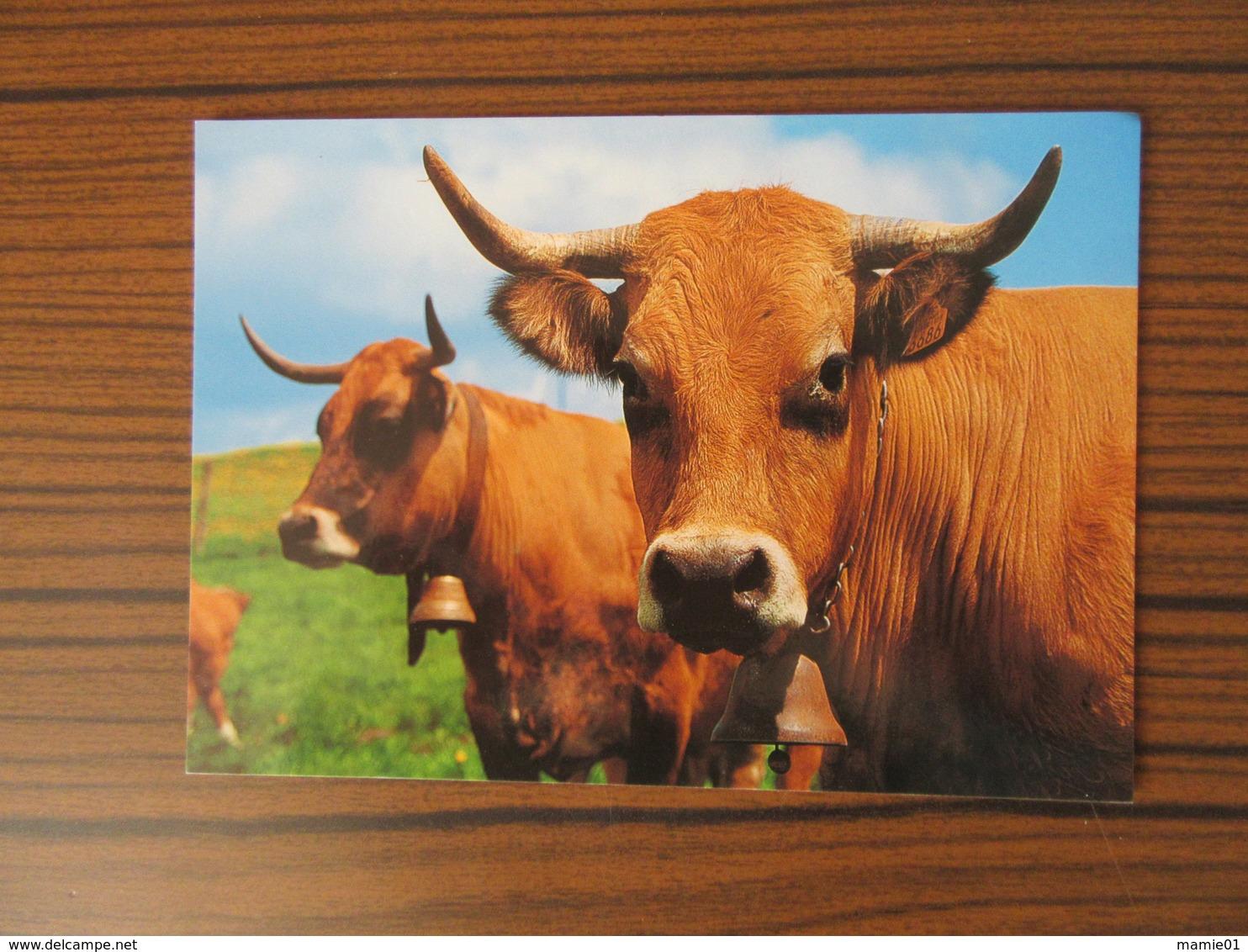 Vache       La Reine De L'Aubrac - Vaches