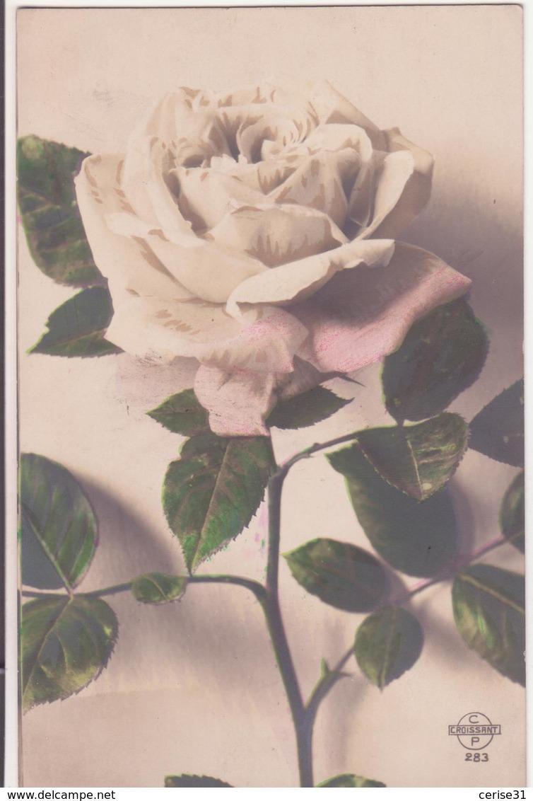 CP -  BELLE ROSE - Fleurs