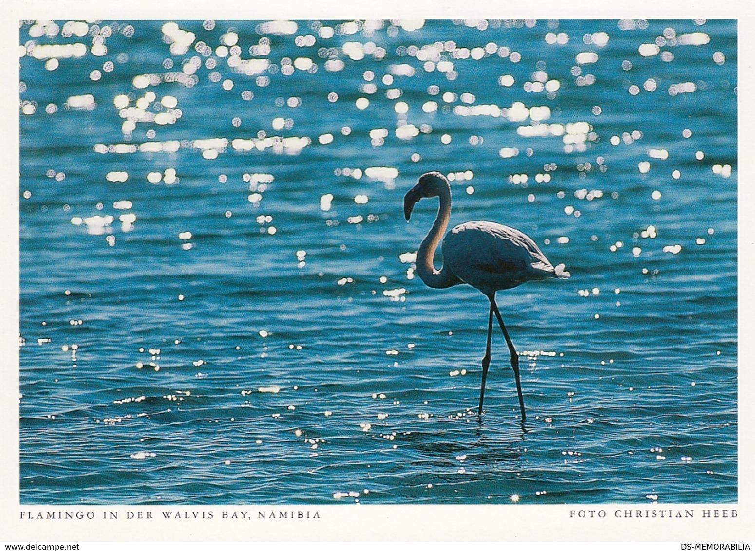 Namibia - Flamingo In Walwis Bay - Namibie