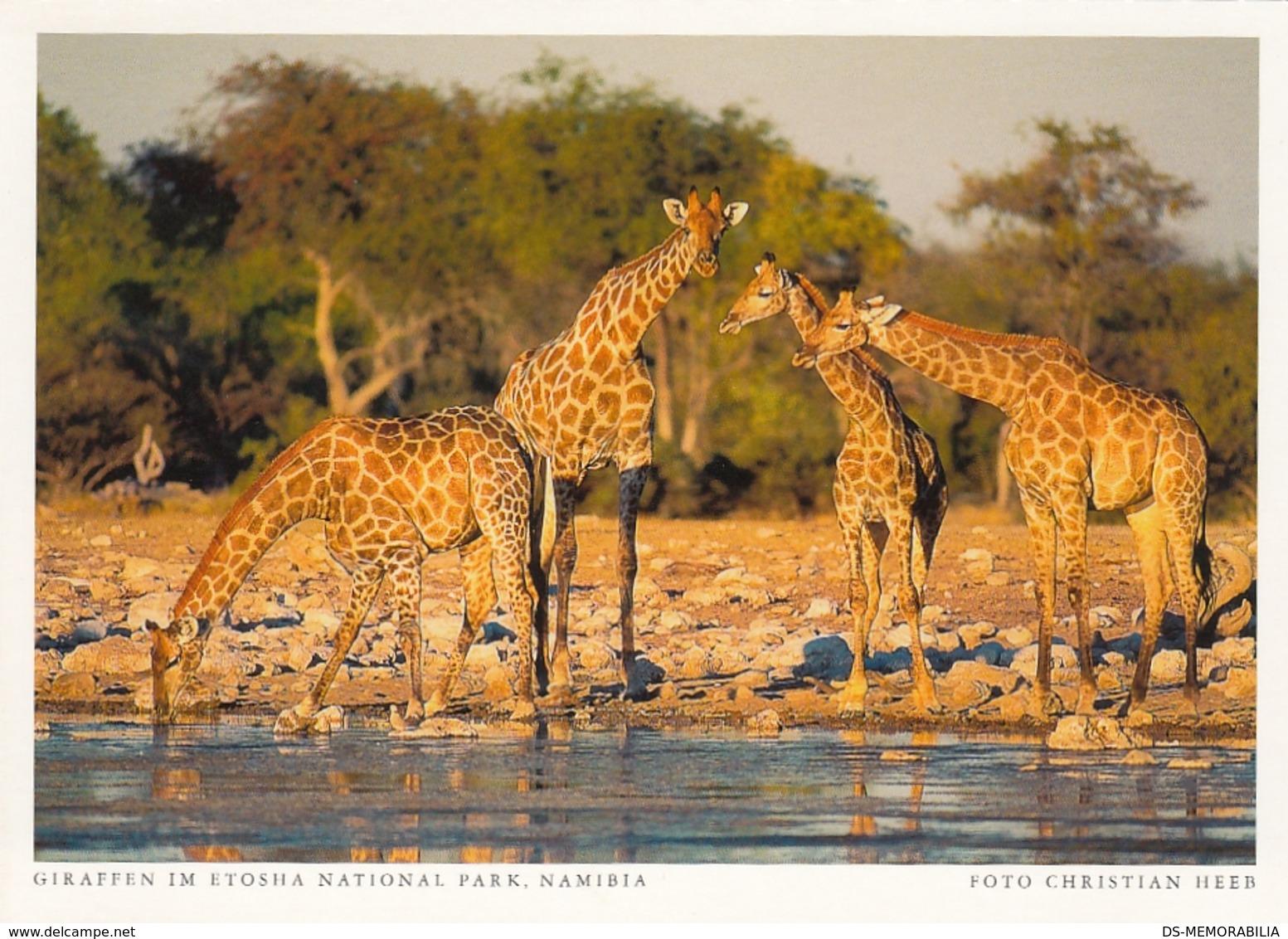 Namibia - Giraffe In Etosha National Park - Namibie