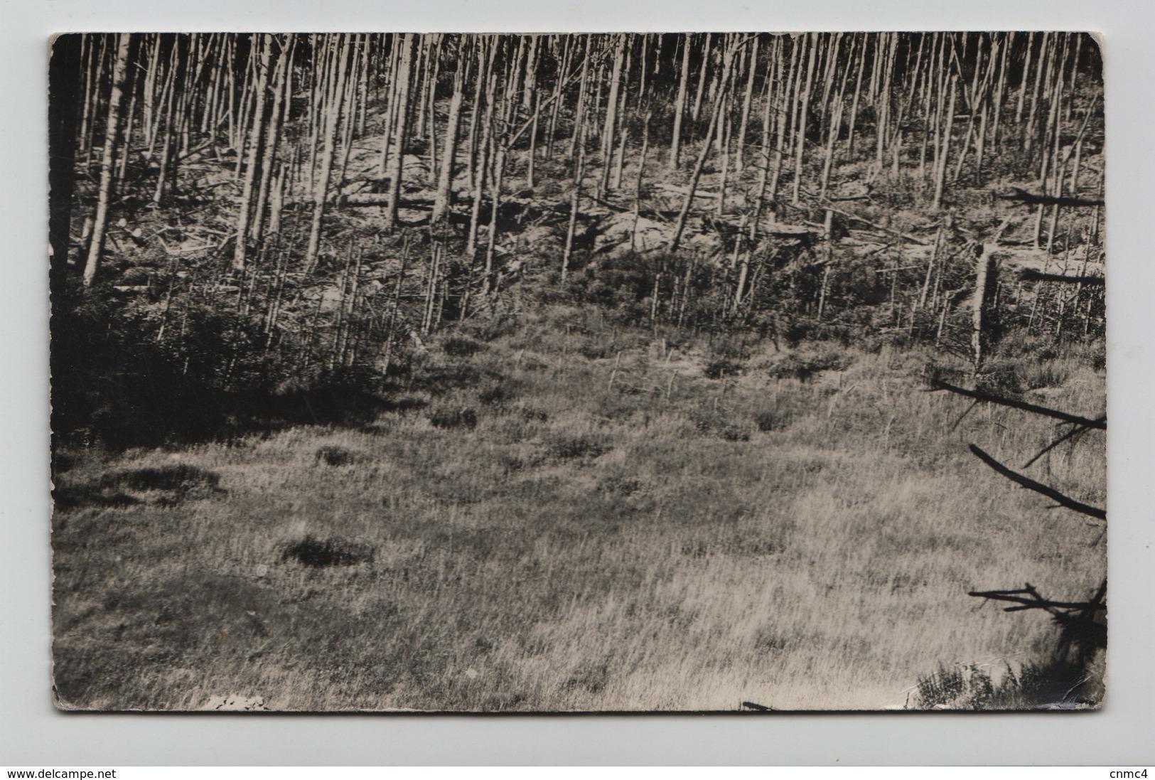 SAINTE MARIE AUX MINES, Environs Maison Du Bois Impacts D'obus 1914-1918 - Sainte-Marie-aux-Mines