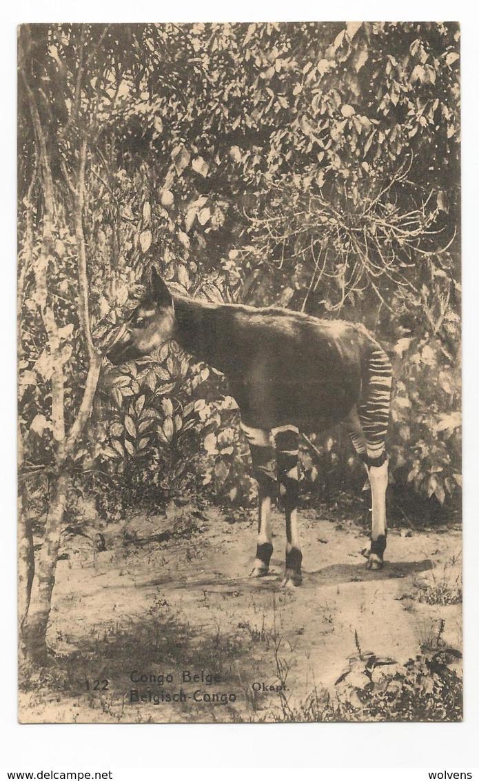 Belgisch Congo Belge Okapi Carte Postale Ancienne EP Oude Postkaart - Congo Belge - Autres