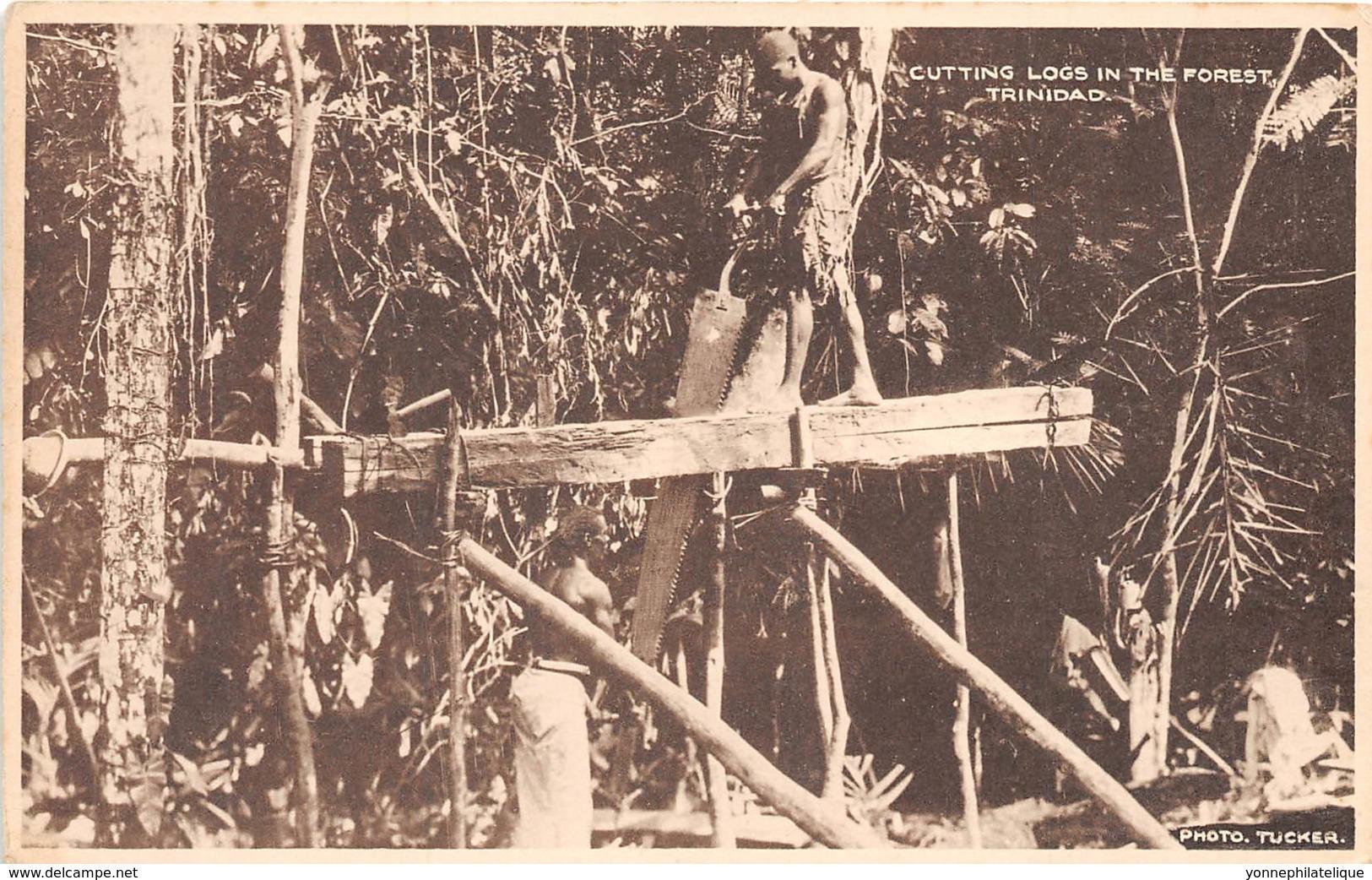 Trinidad - Ethnic / 09 - Cutting Logs In The Forest - Trinidad