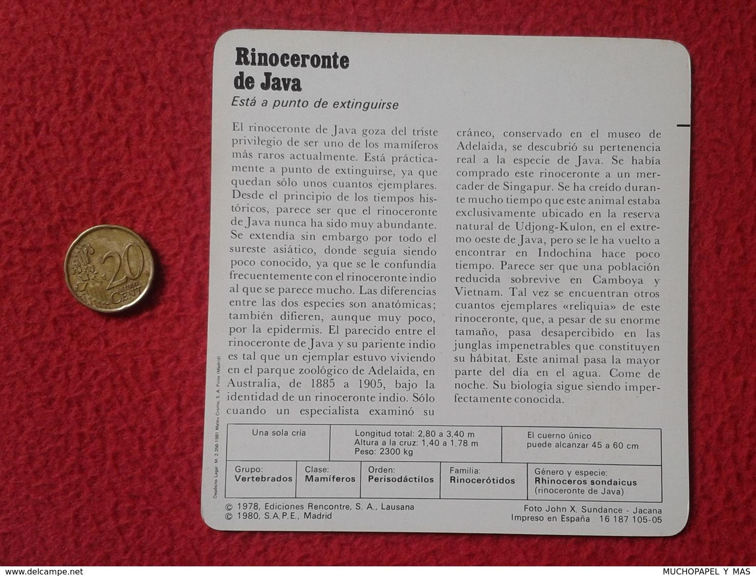 ESPAGNE SPAIN FICHA SHEET FICHE RINOCERONTE DE JAVA RHINO RHINOCEROS RHINOS RHINOCEROSES RINOCERONTES WILDLIFE FAUNA VER - Animales