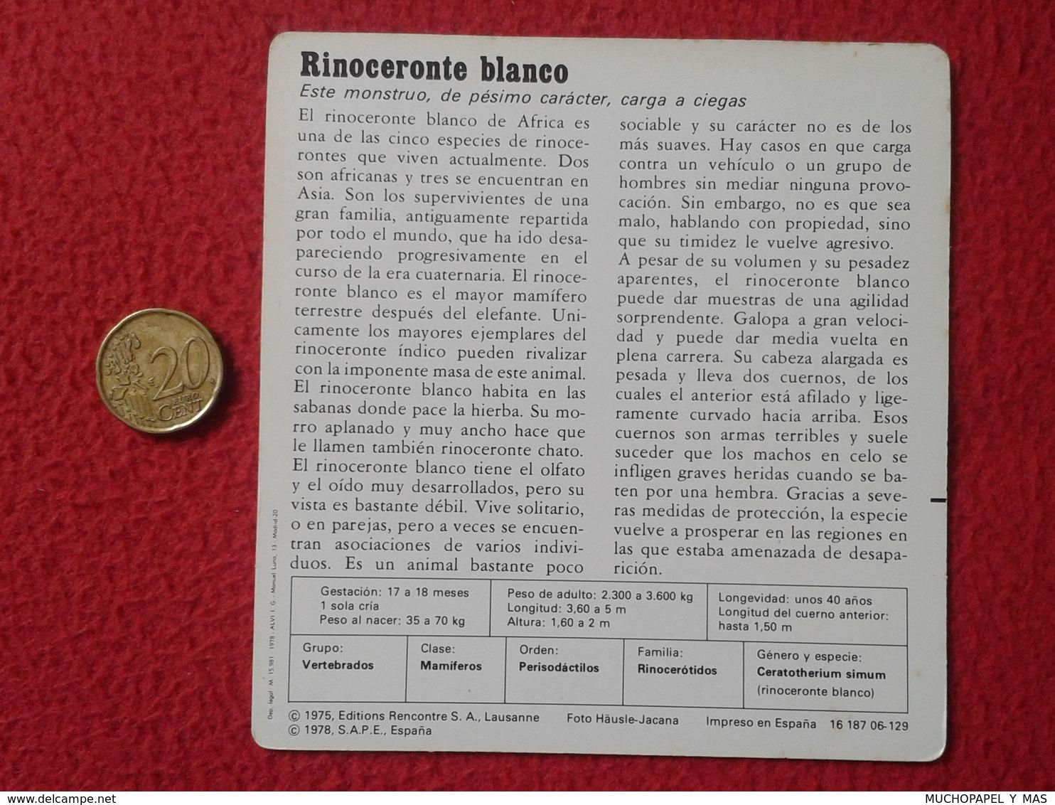 ESPAÑA SPAIN FICHA SHEET FICHE RINOCERONTE BLANCO WHITE RHINO RHINOCEROS RHINOS RHINOCEROSES RINOCERONTES WILDLIFE FAUNA - Animales