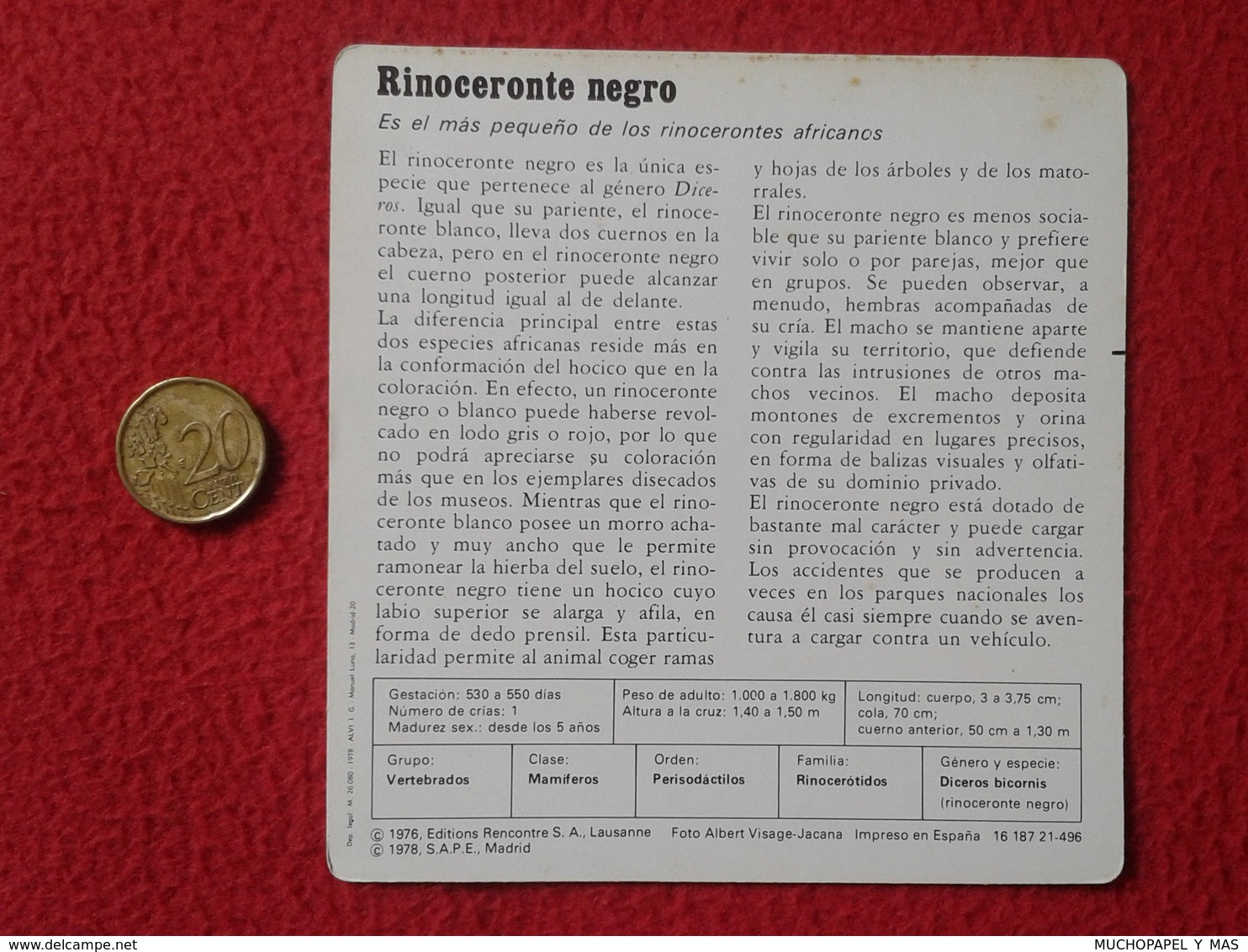 ESPAGNE SPAIN FICHA SHEET FICHE RINOCERONTE NEGRO BLACK RHINO RHINOCEROS RHINOS RHINOCEROSES RINOCERONTES WILDLIFE FAUNA - Animales