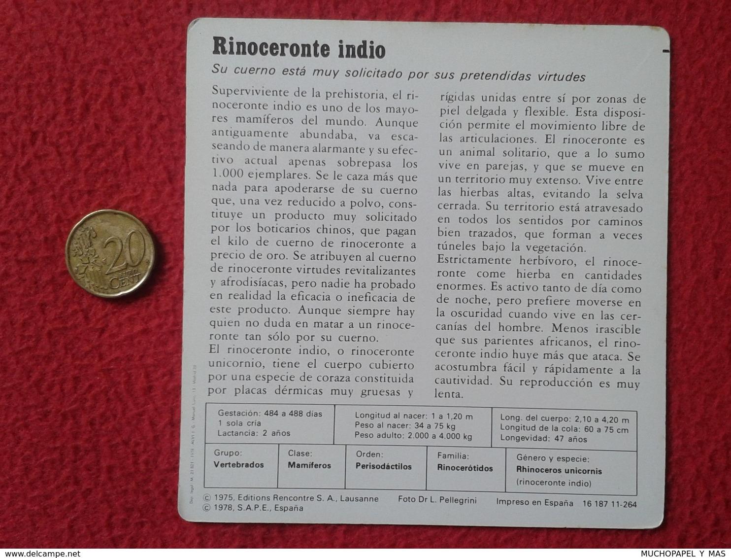 ESPAÑA SPAIN FICHA SHEET FICHE RINOCERONTE INDIO INDIAN RHINO RHINOCEROS RHINOS RHINOCEROSES RINOCERONTES WILDLIFE FAUNA - Animales