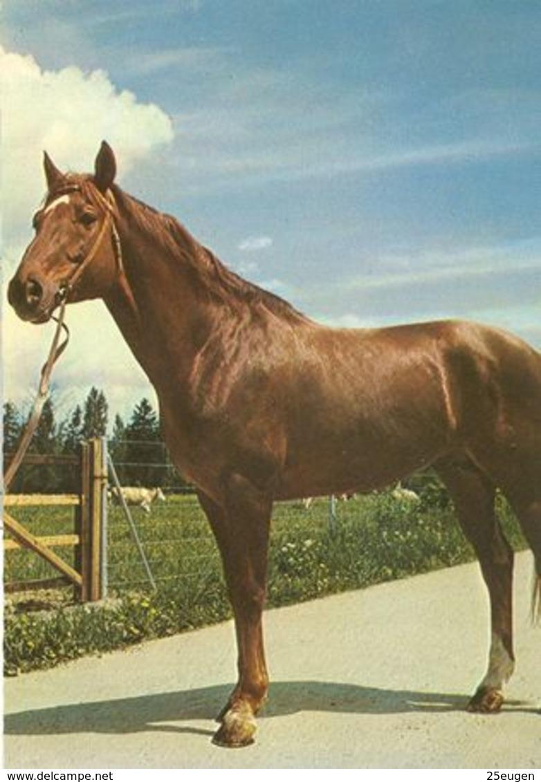 HORSES / PFERDE / CHEVAUX /  POSTCARD UNUSED  ( H  5162 ) - Pferde