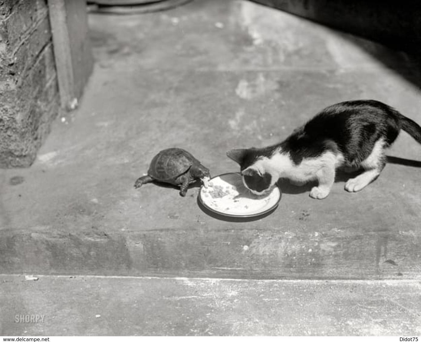 Photo Inattendue Chat Mangeant Avec Tortue Cat - Repro's