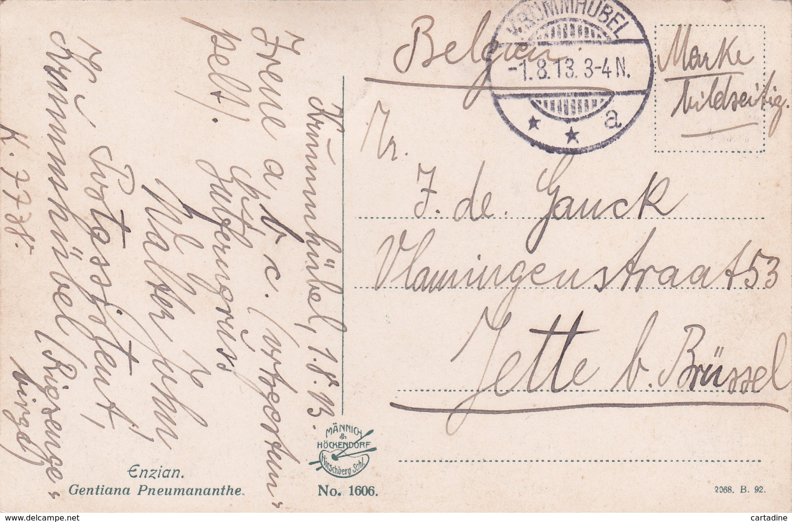 Carpathes - Pologne - Krummhübel Im Riesengebirge - Flora: Enzian Gentiana Pneumananthe - 1913 - Pologne