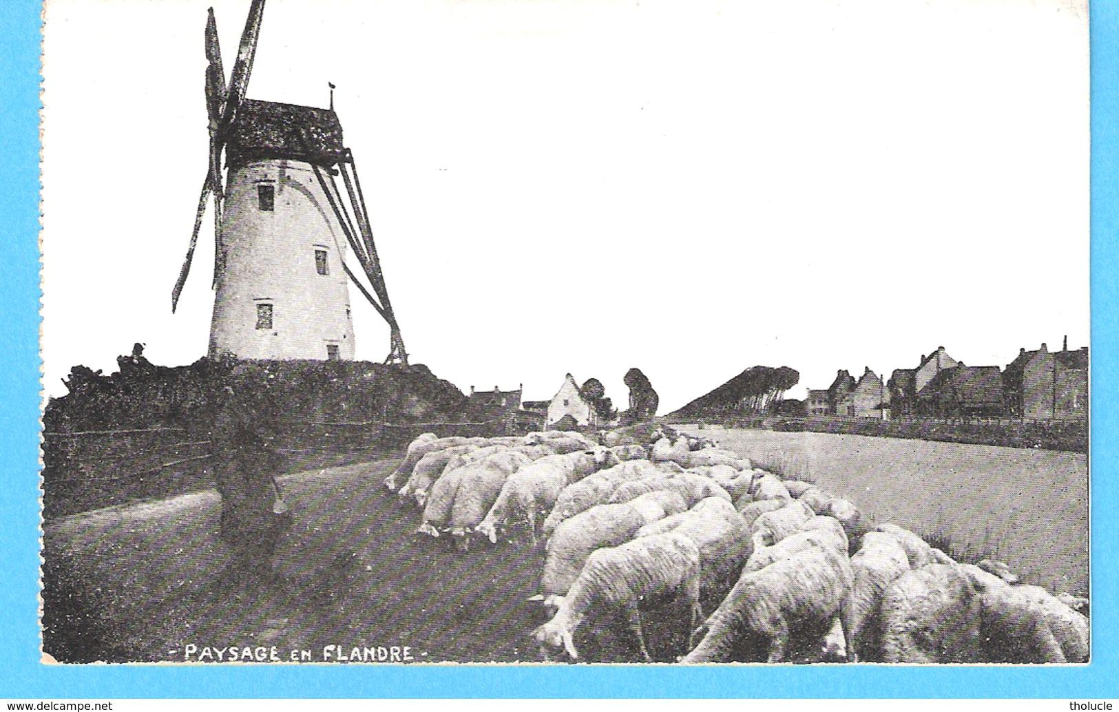 Paysage De Flandre-+/-1910-Moulin à Vent-Molen-Windmühle-Moutons-Schapen-Schaapherder-Damme??? - Belgique