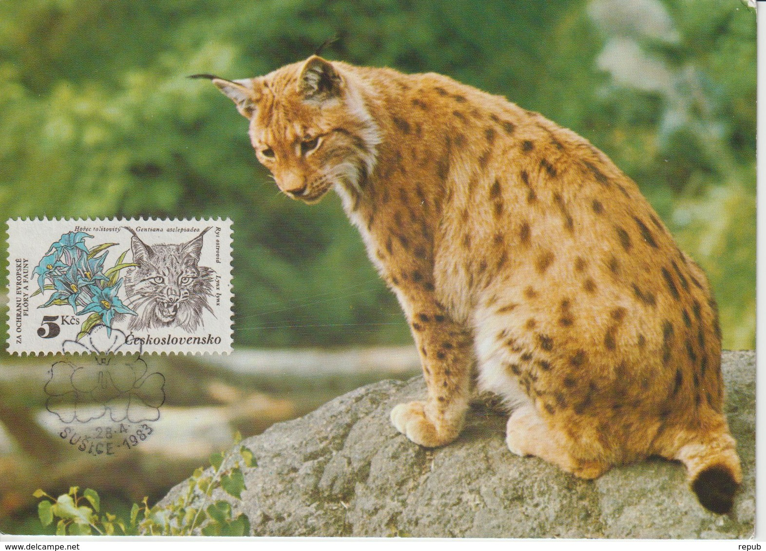 Tchécoslovaquie Carte Maximum Animaux 1983 Lynx 2534 - Cartas