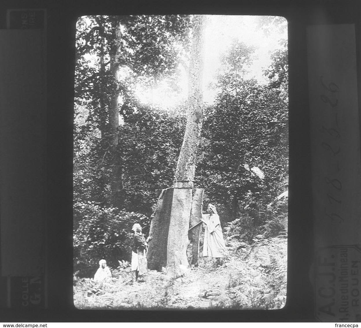 518-23-26 - Enlèvement D'une Planche De Liège - Service Forestier D' Algérie - Plaques De Verre
