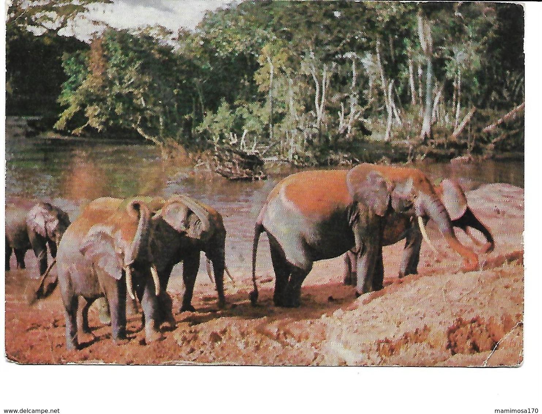 Afrique-KENYA-(Nairobi)-Une Vue Du Bain Des Elephants -PUB.Collection AMORA-TIMBRE-Obliteration-1960 - Kenia