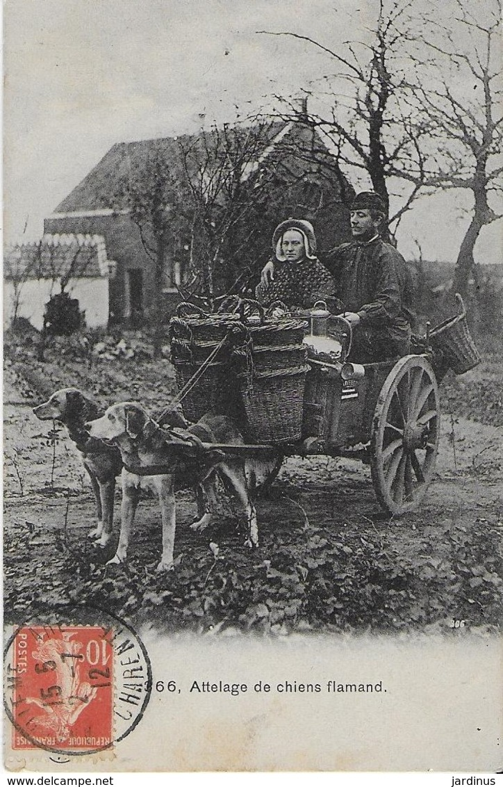 ANGOULEME /Attelage De Chiens Flamand - Superbe Photo Du Couple Sur Leur Charrette (1912) - Angouleme