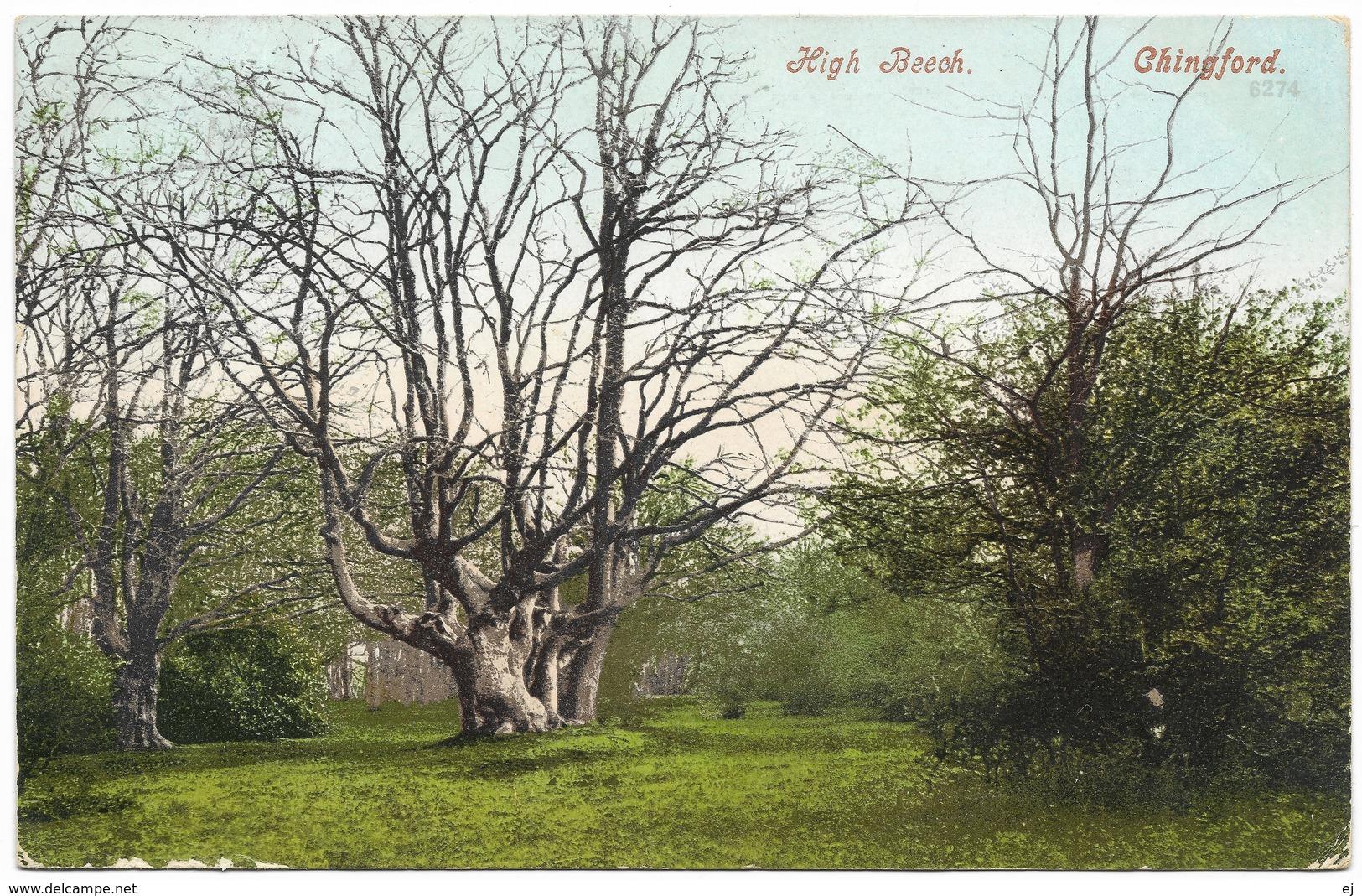 High Beech Chingford Waltham Forest London - Postmark 1904 - London Suburbs