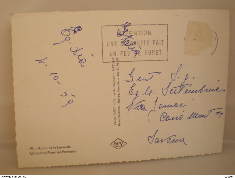 Culture Agricoltura Lavanda  Cartolina Francia Provenza 1959 - Cultures