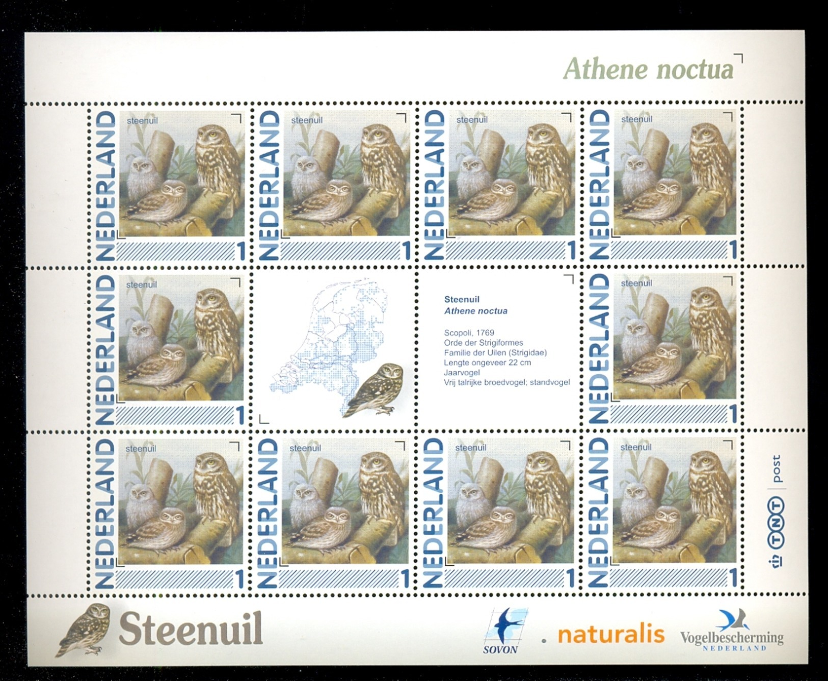 NETHERLANDS COMPLETE SHEET 10v 2011 / 2014 BIRD BIRDS OISEAUX STEENUIL LITTLE OWL HIBOU * MNH - 1980-... (Beatrix)