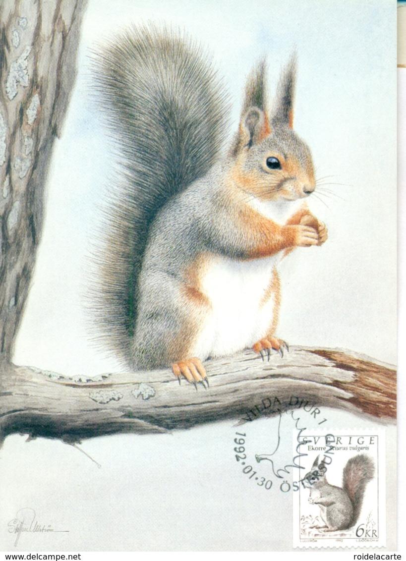 CM-Carte Maximum Card # 1992-Suède,Schweden # Animaux,animals #Rongeur,rodent,Nagetier # Écureuil,Squirrel,Eichhörnchen - Nager